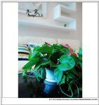 设计师家园-樱花公寓-红男绿女