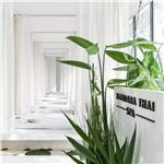 设计师家园-Mandara Spa